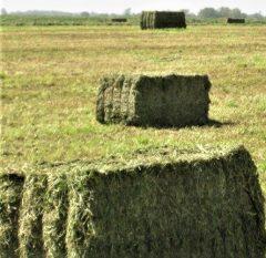 Farmers & Merchants Seed